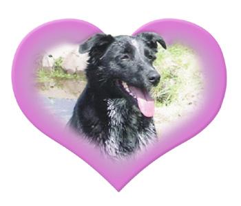 Annie's Healing Hearts